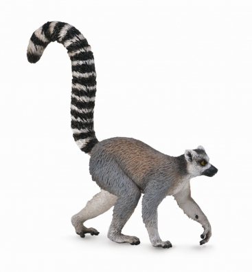 Ring-Tailed Lemur  - 88831