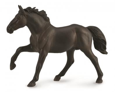 Nonius stallion