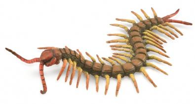 Centipede - insects-and-spiders