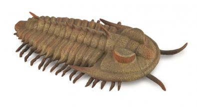 Redlichia rex trilobite - other-prehistoric-animals