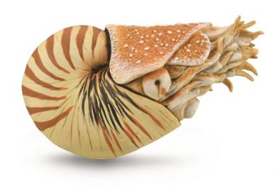 Nautilus pompilius - other-prehistoric-animals