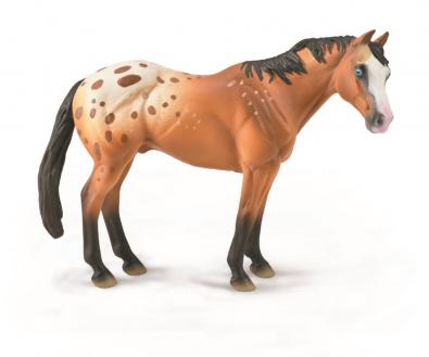 Light Brown Appaloosa Stallion