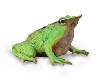 Darwin's Frog - reptiles-and-amphibians