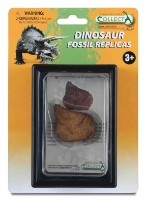 Dorsal Plate of Stegosaurus Box Set - 89286