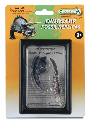 Diente y Garra de Allosaurus - box-sets